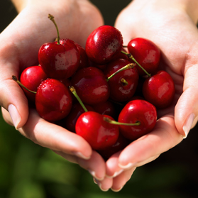 Commodity Cherries, 40# IQF